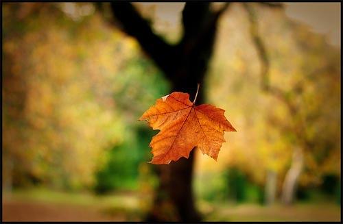 Roxey Ballet Presents Fall