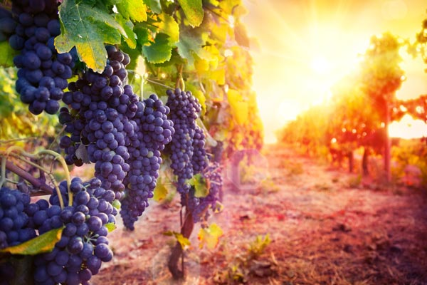 The Inaugural After The Harvest Wine & Food Event Will Take Place In Jersey City