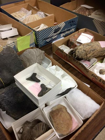 An array of fossils in boxes