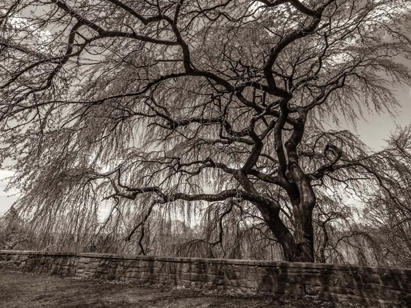 """D&R Greenway Land Trust Presents The Juried Exhibition """"Lovely as a Tree"""""""