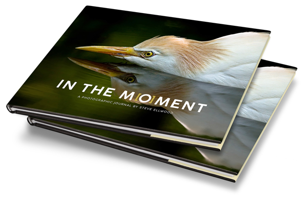 Renowned Wildlife Photographer Publishes Stunning Collection Of Exceptional Images