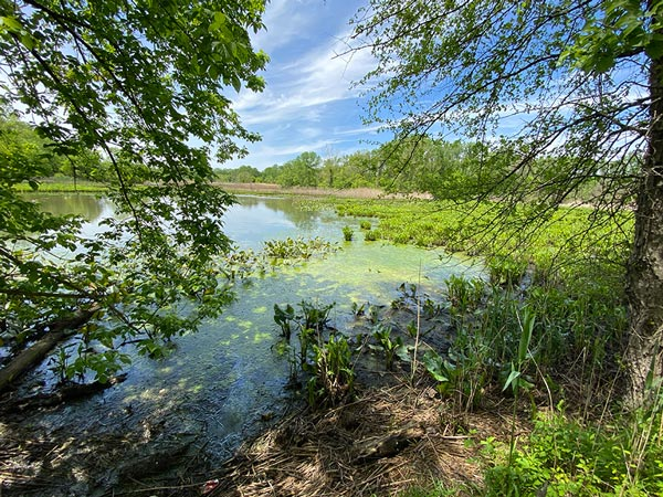 The Friends for Abbott Marshlands Announces Reopening of Tulpehaking Nature Center