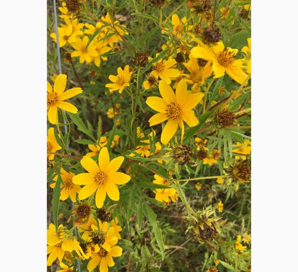 D&R Greenway Releases Spring Native Plant Sales