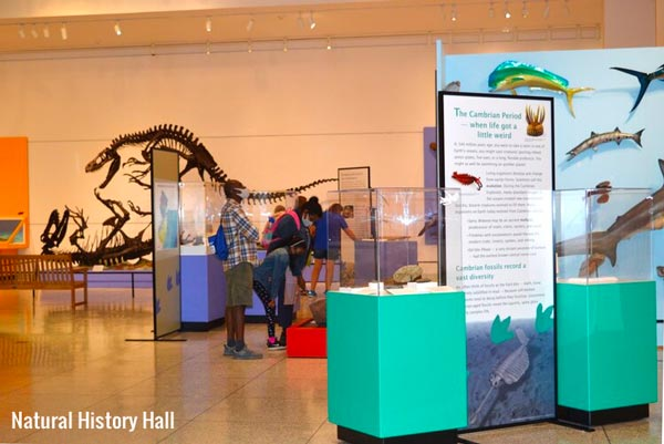 The New Jersey State Museum - Guarding Our Treasures